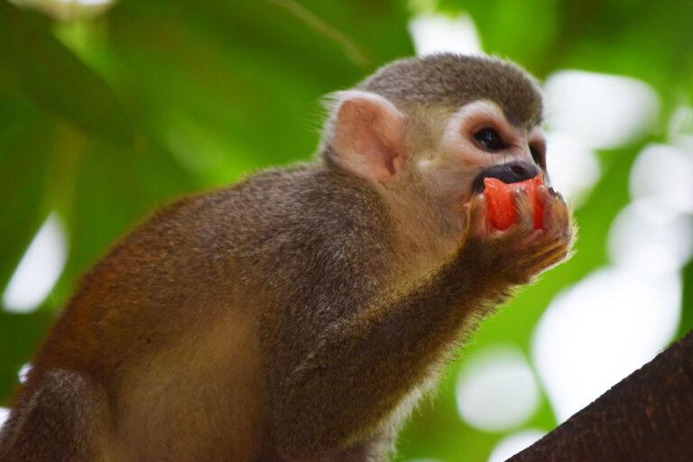 bioparque-los-ocarros-mono-1